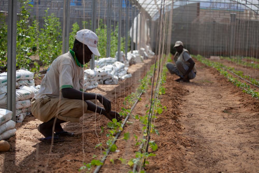 Somalia farmers