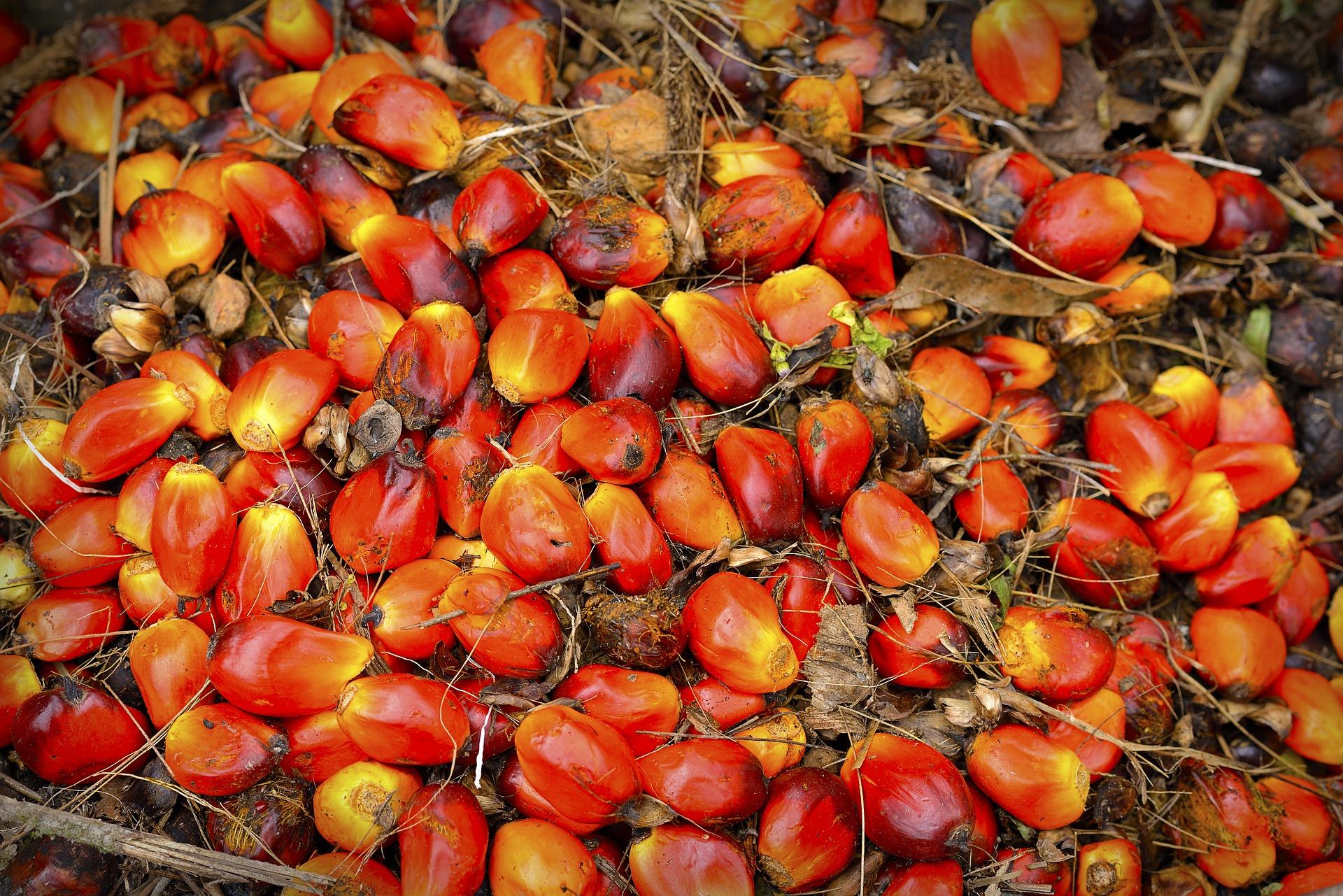 Pixabay – Palm Oil Fruit