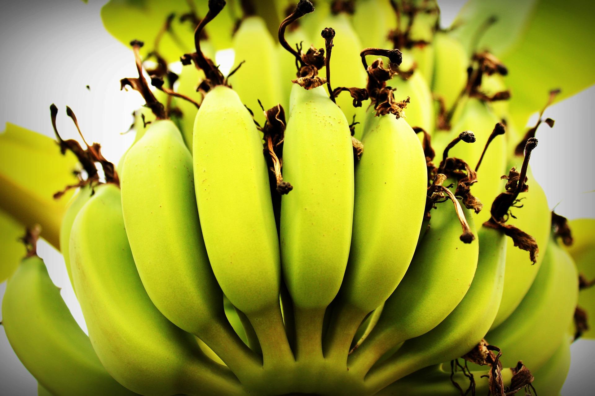 banana-1549158_1920