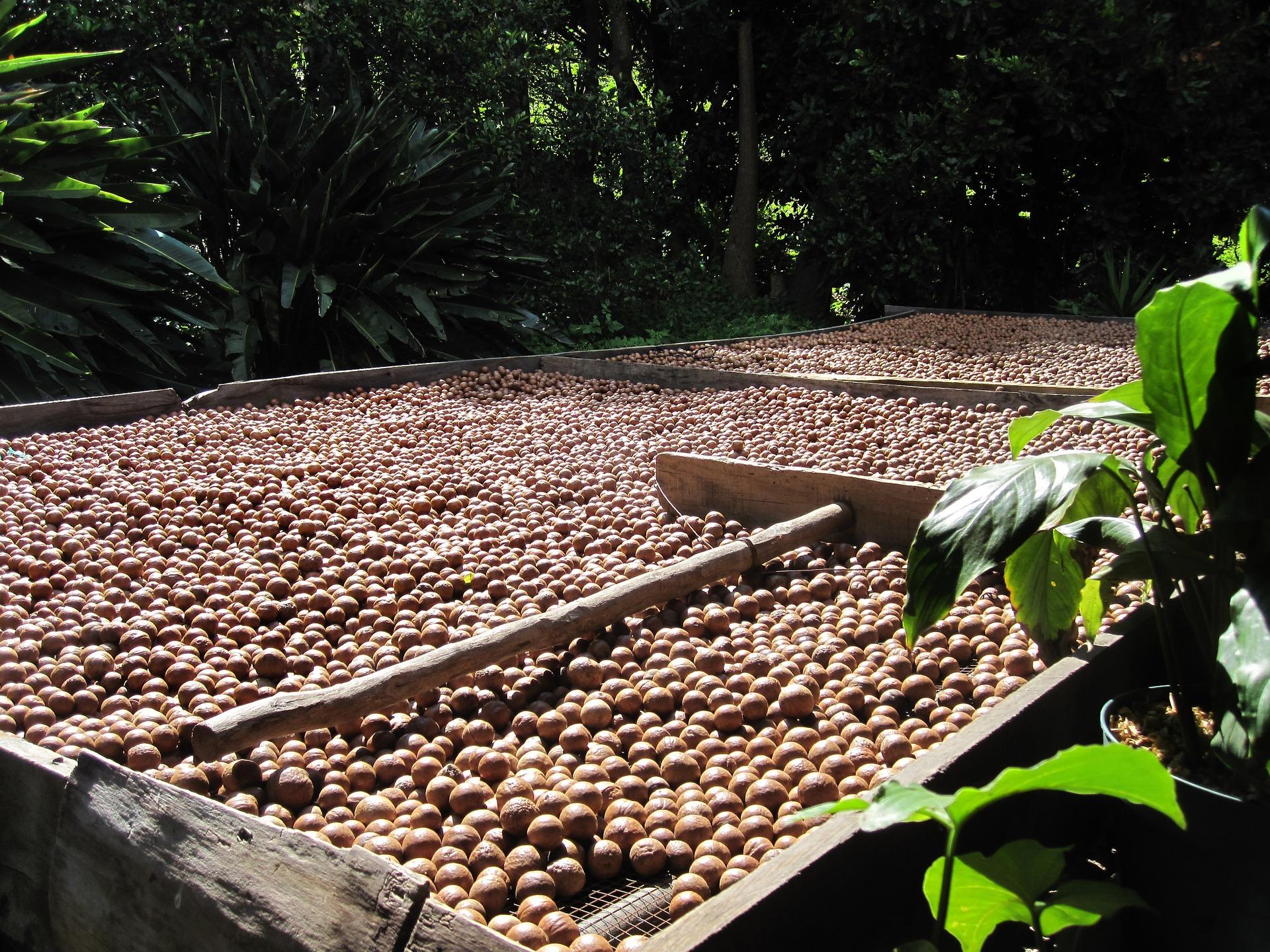 Pixabay – Madacamia, Agriculture