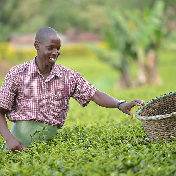 Juhudi – Tea Farmer