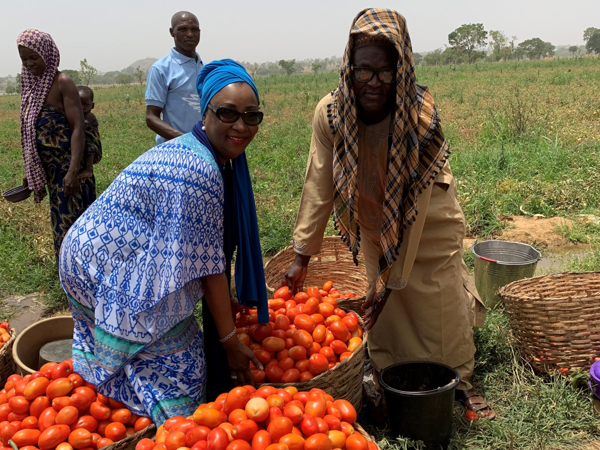 Goodwell – Tomato Jos Agriculture