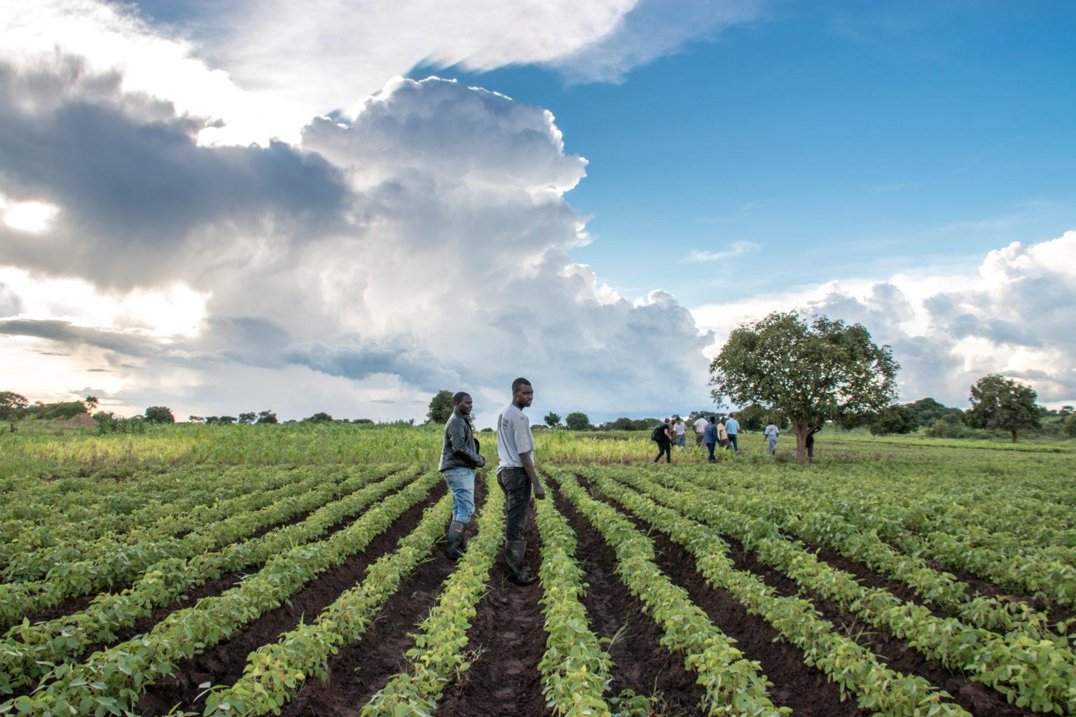 Good-Nature-Agro-Zambia